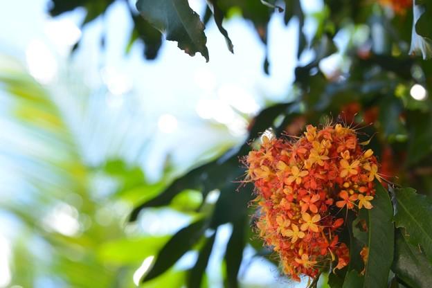 Photos: Sorrowless Tree 3-18-17