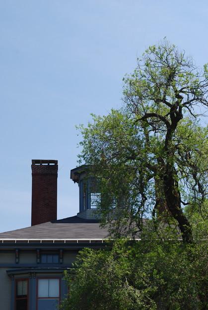 Photos: a Cupola and a Tree