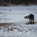 Photos: A Dinosaur  1-8-11