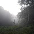 写真: The Fog