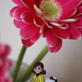 花とフチ子とキティ