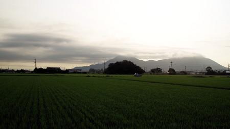真夏の田園朝景色