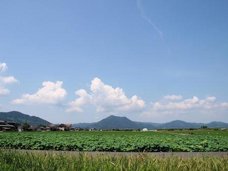 レンコン田の彼方の常山