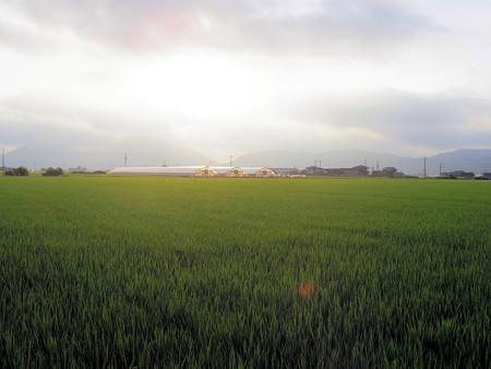 8月の田園朝景色