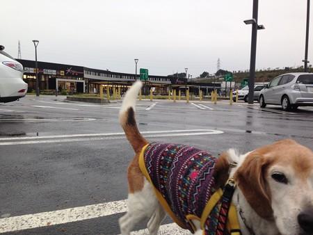 帰りの第二東名のサービスエリア。ずーっと雨でしたね~、あと2時間で帰宅です。もうちょっとだよマリン