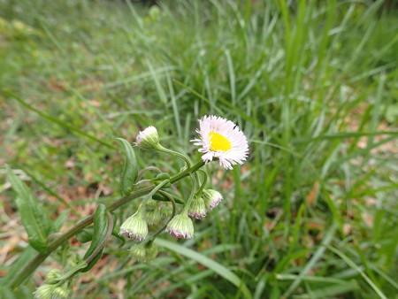 このお花が…