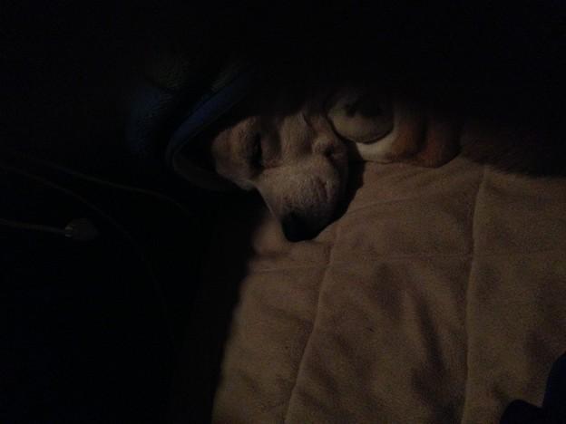 朝4時起床で二度寝中のうみちゃん