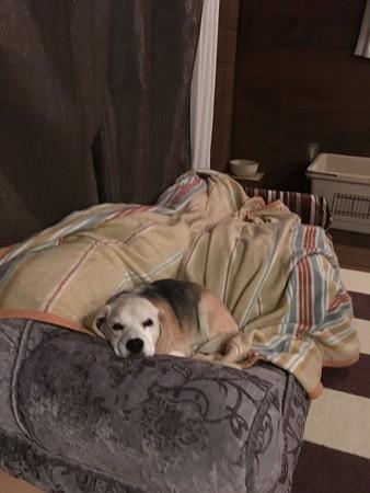 頂き物のベッドにご満悦のうみちゃん