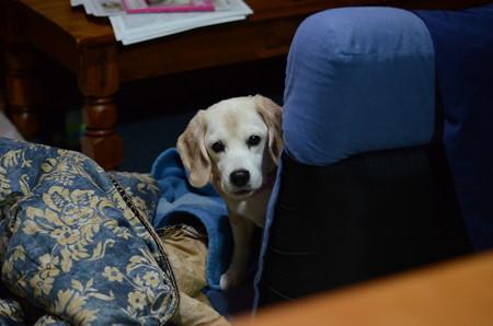 座椅子から覗く顔が可愛い
