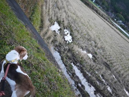 朝の散歩。寒そうな畑です