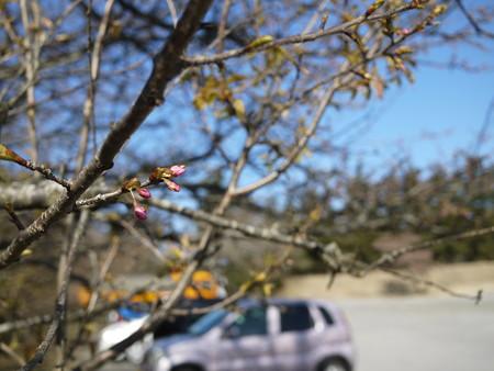 春ももう直ぐかな?