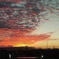 写真: 夕日(イオン木曽川駐車場から)