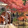 写真: 東山植物園1