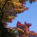 写真: 比叡山延暦寺の紅葉5