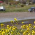 Photos: 春の農村
