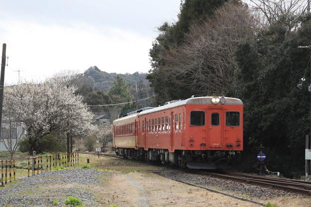 いすみ鉄道 キハ28・52 急行夷隅