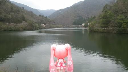 桜ミク:「これが伊自良湖ですか」