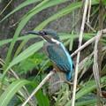 幼鳥の季節 1