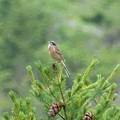写真: 雨に濡れながら佇む鳥がいる・・・
