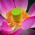 写真: 色鮮やかに咲く