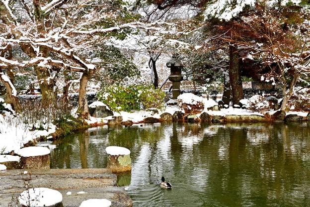 2017_0115_113126 円山公園雪化粧