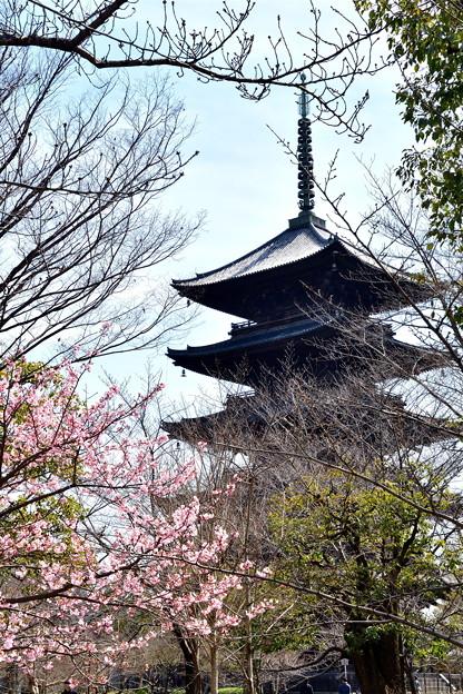 2017_0312_124427 桜開花
