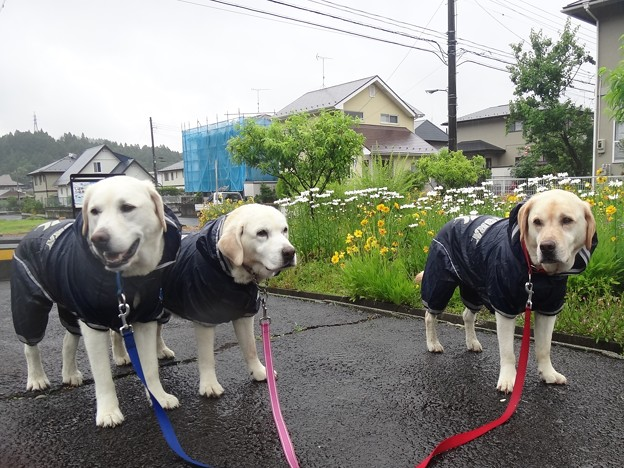 梅雨入り日