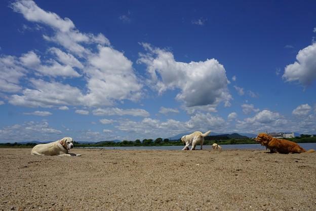 空と雲と犬
