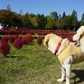 Photos: みちのく杜の湖畔公園