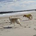 Photos: 海辺の散歩