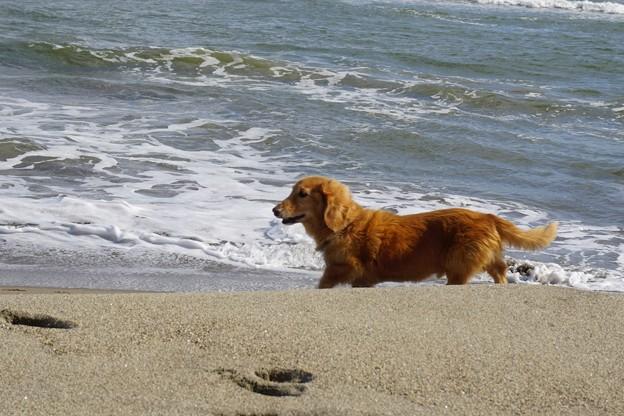 海辺の散歩