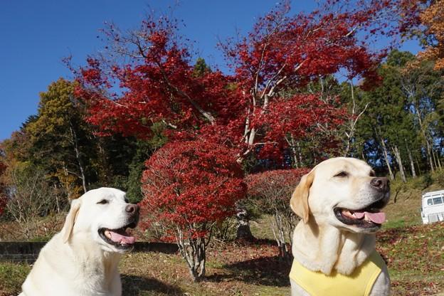わんこと空と黄葉