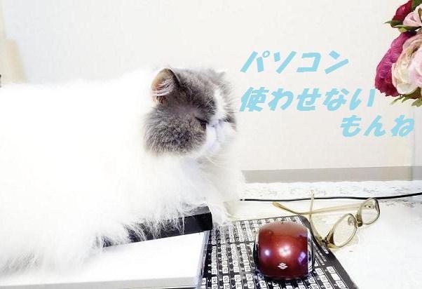 写真: パソコンジャック1