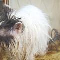 写真: 毛糸猫1