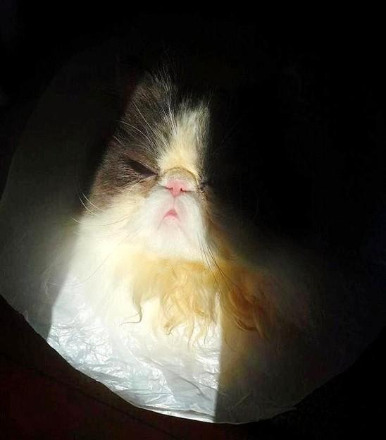 写真: 光が眩しいの