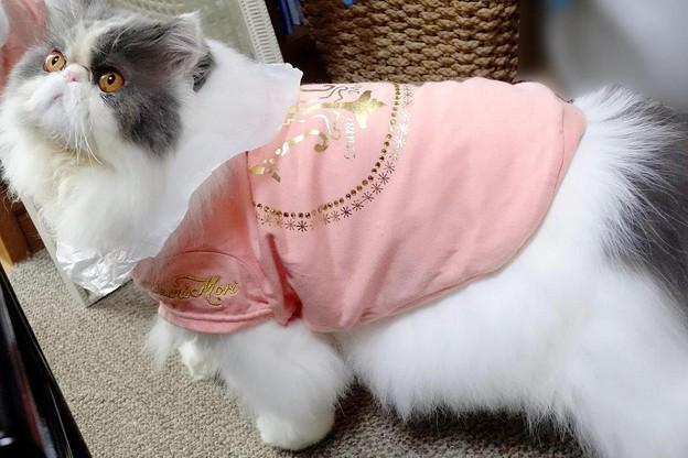 写真: ピンクを着た仔(1)