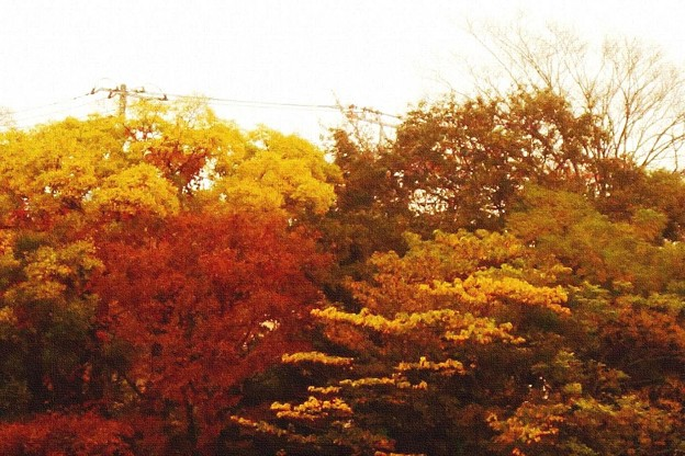 写真: 窓の外の紅葉 (2)