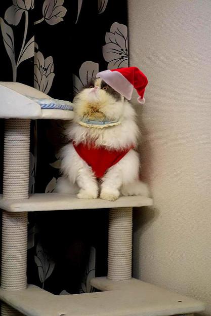 写真: サンタくうちゃん