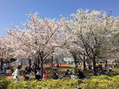 近所の桜03