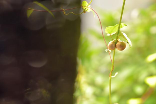 お庭のめぐみ。