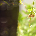 Photos: お庭のめぐみ。