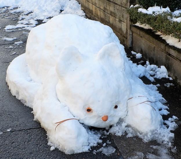 雪ネコ(正面)
