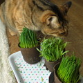 Photos: 猫の草