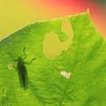 写真: 虫影