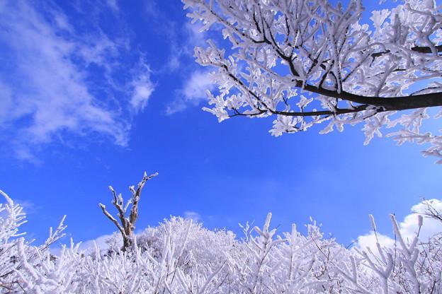 ☆霧氷の空