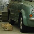 写真: 猫と自動車