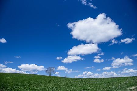 雲の生まれるところ