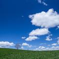 写真: 雲の生まれるところ