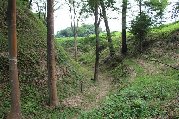 写真: 興国寺城空堀跡