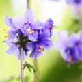 ~☆紫の君☆~